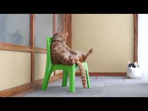 WATCH: This cat sits in a chair like a person.