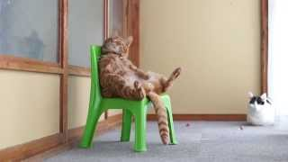 Worlds Coolest Cat Lounges on a Chair