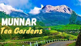 Munnar India  city pictures gallery : Amazing Munnar Drive Teagarden Landscape kerala India *HD* മുന്നാർ