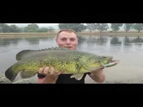 Hunchback surface fishing for Murray Cod