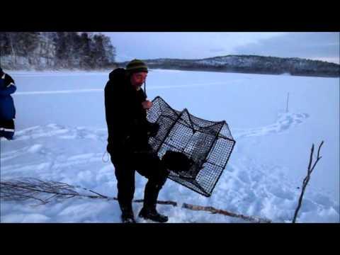 Rusefiske etter lake p� isen i Pasvik