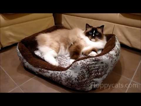 0 AlphaPooch Cuddler Rectangular Bolster Cat Bed Review