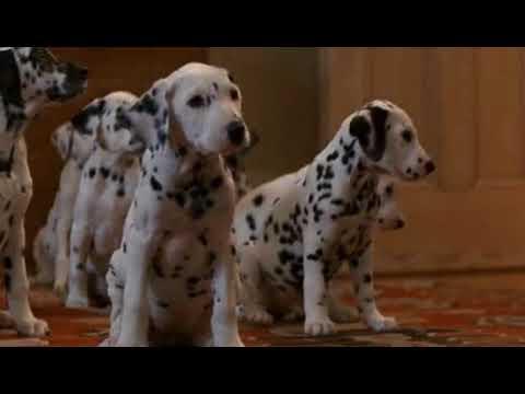 101 dalmatians - collar scene