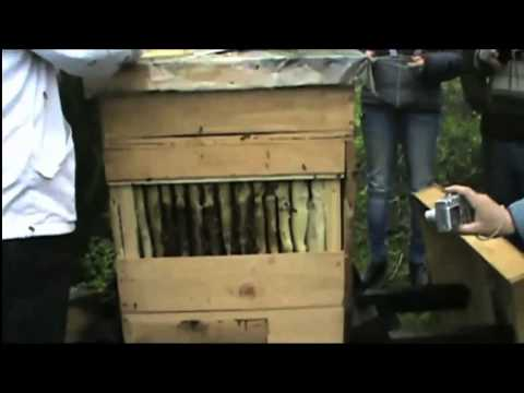 apikultura - www.peronehive.com Alfredo Cabrera, a beekeeper with 30 years of experience, opens his perone hive as part of a demonstration during Oscar Perone's PermApicu...