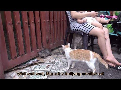 Mẹ ỐC tắm cho cún cưng cực hài hước