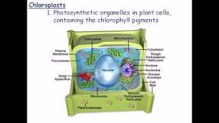 3. Plant cell