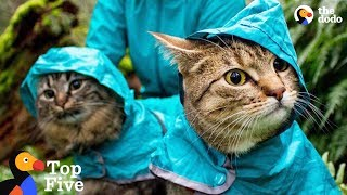 Adventure Cats Who Were Once Strays Have The Best Moms Now + Other Cat Rescues | The Dodo Top 5 by The Dodo
