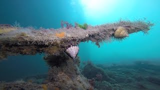 Swanage United Kingdom  city images : Swanage UK, first sea dive of the season