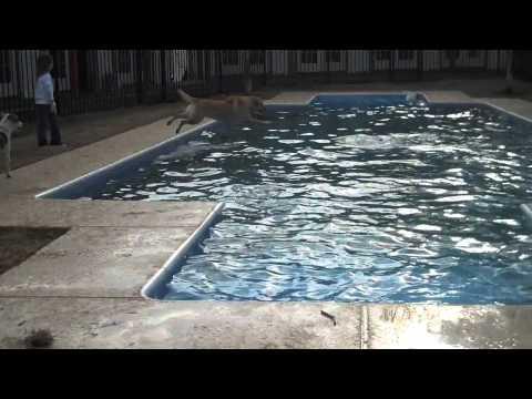 Brandi loves the pool (видео)
