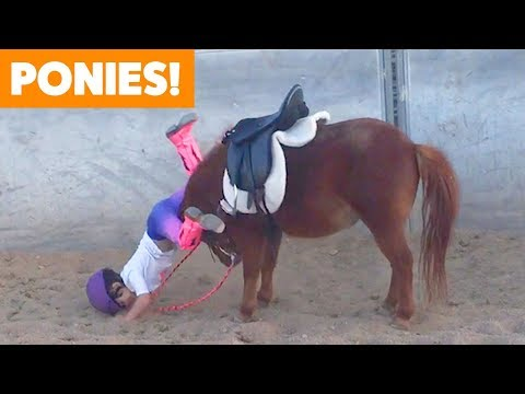 Funny animals - Funniest and Cutest Ponies  Funny Pet Videos