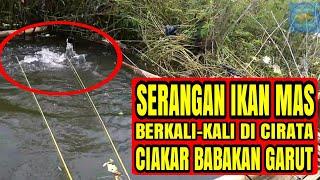 Video SERANGAN IKAN MAS Berkali-kali Saat Mancing di Cirata Babakan Garut MP3, 3GP, MP4, WEBM, AVI, FLV September 2018