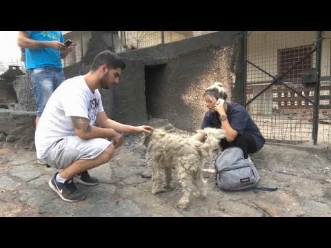 Μάτι: Σκύλος επιβίωσε σε φούρνο καμμένου σπιτιού! (βίντεο)…