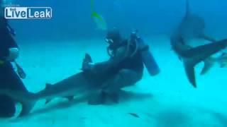 Как подружиться с акулой