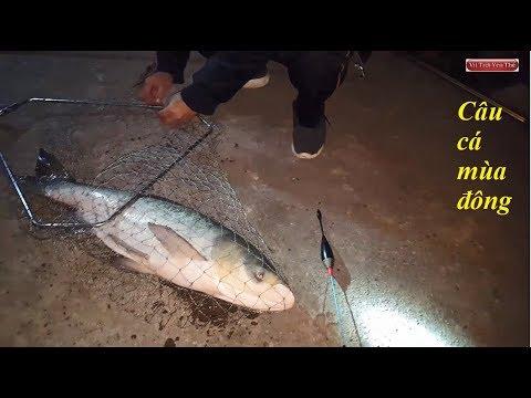 Câu cá giải trí – mùa đông vẫn câu được cá khủng