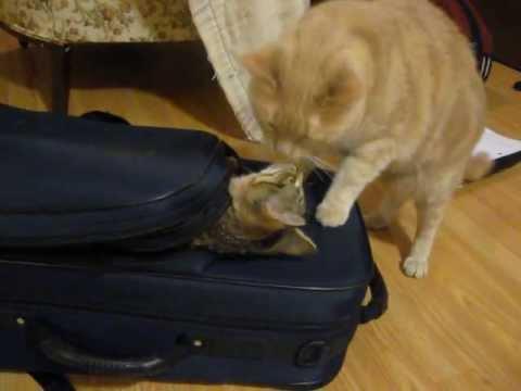 Gato vs Mochila