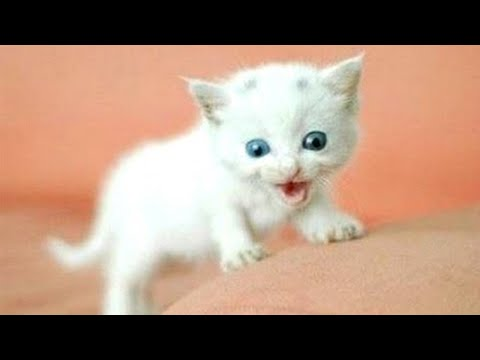Funny Cats and Kittens Meowing Compilation 2020