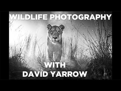 Wildlife Photography - David Yarrow Shares His Photography Techniques - GMAX STUDIOS