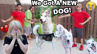 Video MY DOGS RAN AWAY!! (I CRIED) (PRANK) MP3, 3GP, MP4, WEBM, AVI, FLV Maret 2019