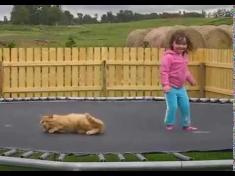 gatti e bambini che saltano per aria sui tappeti elastici