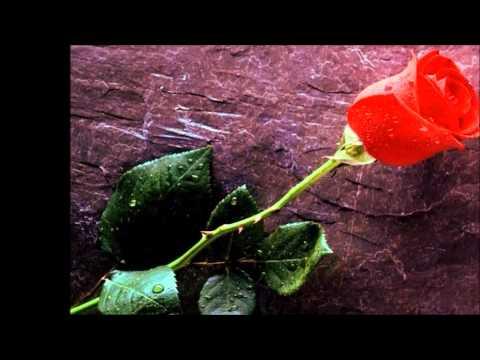 Ayer encontré la flor - Gloria Estefan