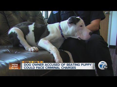 Dog owner accused of beating puppy could face criminal charges