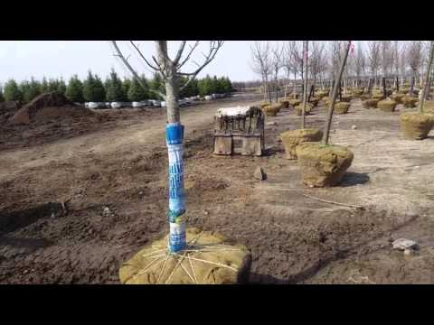 Skid Steer Tree Mover