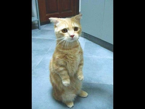 The World's Most Funny Cat Videos 2013 cat going 2 work youtube funny cat pics,faces,names