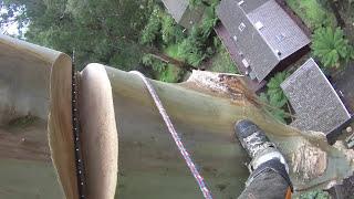 Video 70 Metre Mountain Ash Removal Day 2 MP3, 3GP, MP4, WEBM, AVI, FLV Juli 2019