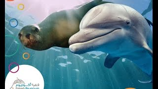 Video Fakieh Aquarium in jeddah MP3, 3GP, MP4, WEBM, AVI, FLV Juli 2018