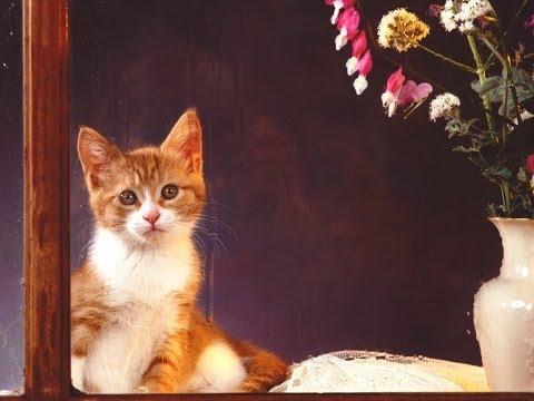 #647. Кошки (В мире животных) (видео)
