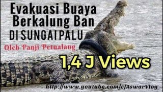 Video Evakuasi Buaya Berkalung Ban Di Sungai Palu Kota Palu Bersama Panji Petualang MP3, 3GP, MP4, WEBM, AVI, FLV Desember 2018