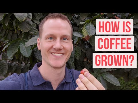 What is coffee and how is it grown? - Bean to Beverage, Ep 1