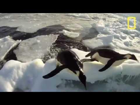 Pinguins in de kerk