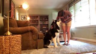 How to Teach Your Dog to STOP Jumping Up!