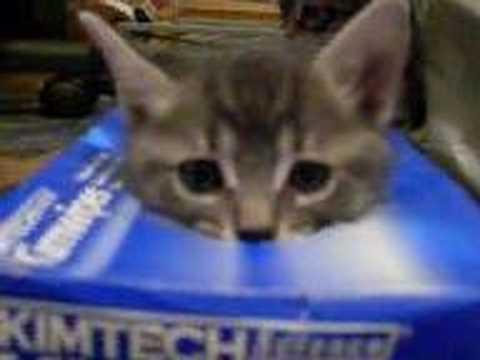 貓咪三兄弟看見洞就想塞進去!超可愛!