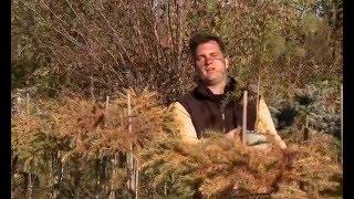 Oltott örökzöld különlegességek - Kertbarátok - Kertészeti TV - műsor
