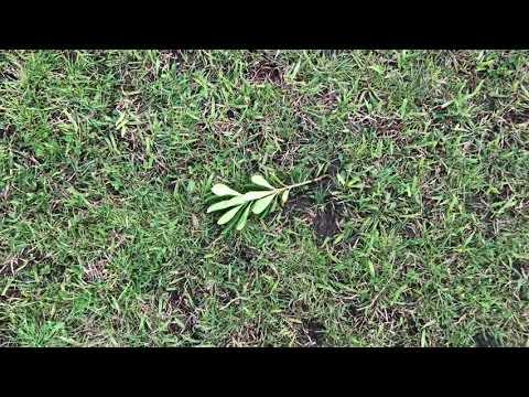 La Plantita
