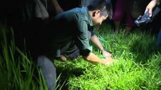 Bắt Chạch đêm ở Can Lộc ,Hà Tĩnh - Cafe Sáng