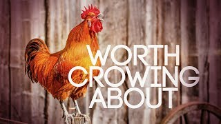 Worship is Worth Crowing About