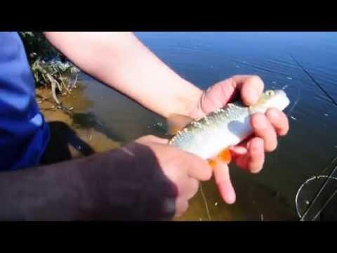 поиск яндекс рыбалка