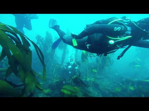 Diving the SS Maori with Oceanus Scuba