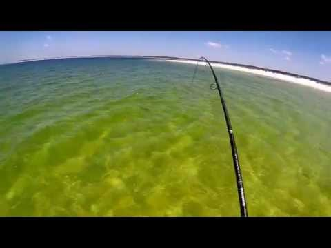 School of Over Slot Redfish on the beach. Mom out rippen lips!!!