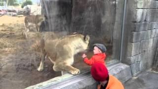 El Paso Zoo lion loves children