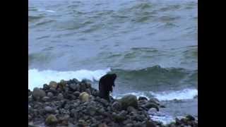 Fuat Saka - Düz [Karadeniz'e Kalan - © 2013 Kalan Müzik]