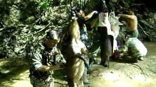 hmong-ga-hog-21sib-paab-tsheev