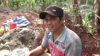 Video Membuat  Pupuk Organik & Pupuk Hayati Bahan - bahan dari Alam PART. 2 MP3, 3GP, MP4, WEBM, AVI, FLV September 2019