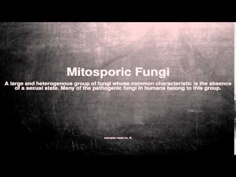 Medical vocabulary: What does Mitosporic Fungi mean
