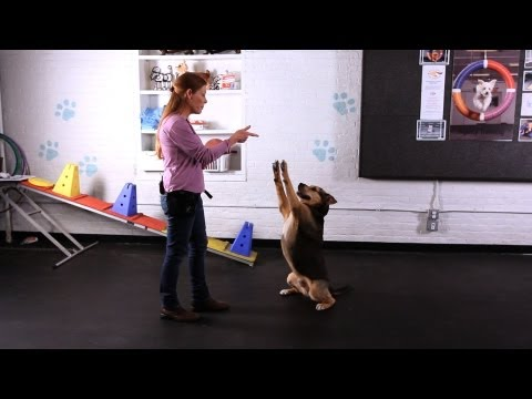 How to Teach the Freeze Dog Trick aka Stick 'em Up Trick | Dog Tricks