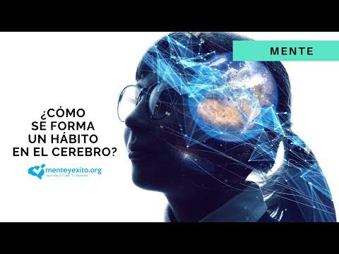 ¿Cómo Se Forma Un Hábito En El Cerebro?