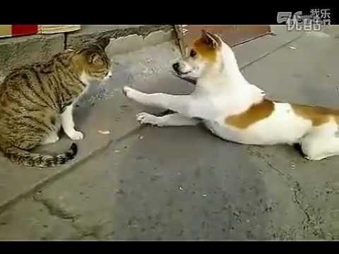 主人太壞了, 令狗狗太糾結了